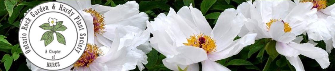 Ontario Rock Garden & Hardy Plant Society